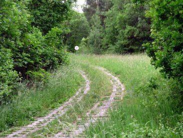 Die Natur erobert langsam auch den Kolonnenweg zurück