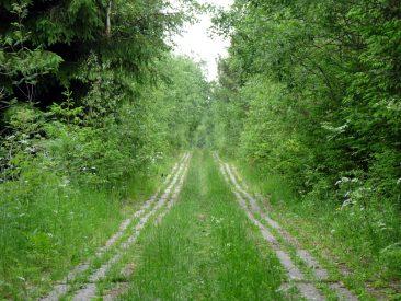Kolonnenweg durchs grüne Band