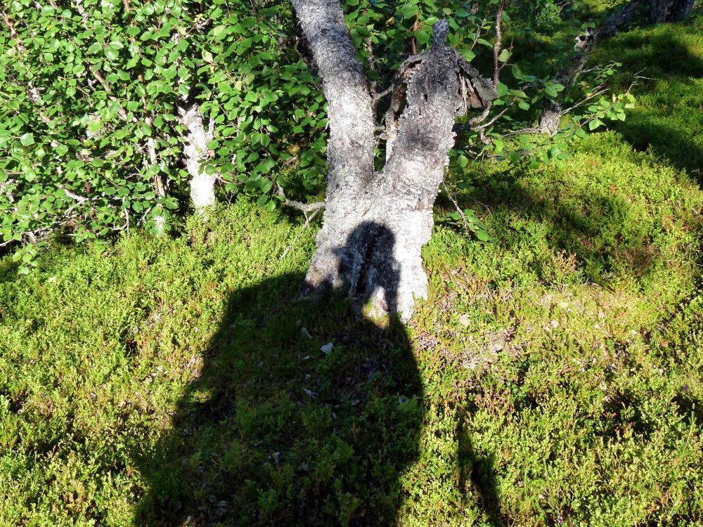 Kungsleden_2015_Tag_5_18