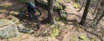 Trail & Treppen im Pfälzerwald